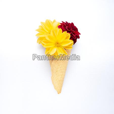 snack in bloom