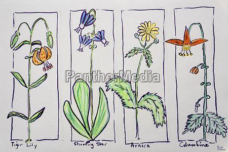 wildflowers from mt rainier national park