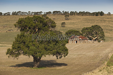 australia barossa valley mount pleasant old