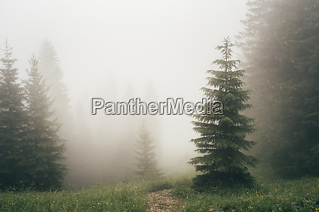thick fog covering forest