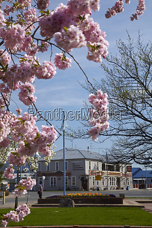 spring blossom and the brown pub