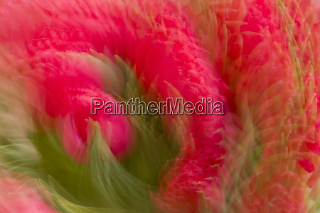multiple exposure of bouquet of red
