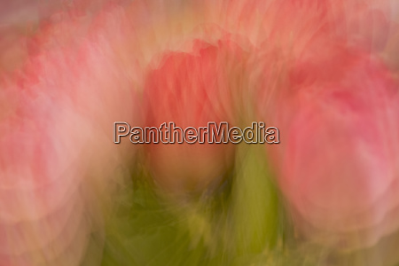 multiple exposure of bouquet of pink