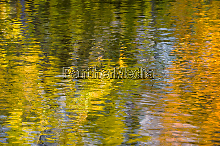 shimmering leaves of colorful autumn trees