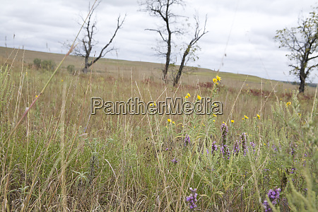 united states kansas flowers bloom in