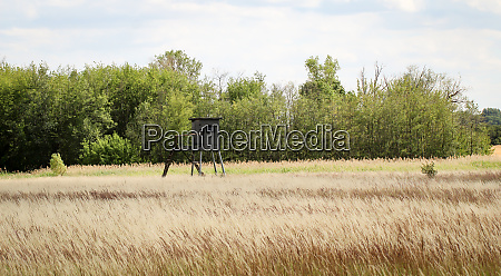 a spacious clearing meadow with a