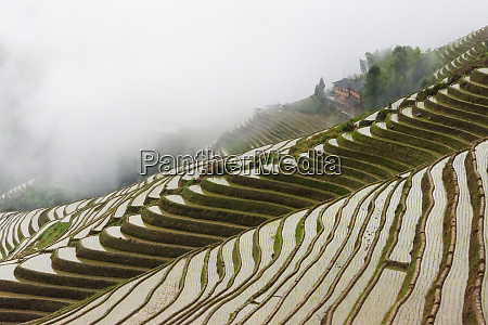 water filled rice terraces in morning