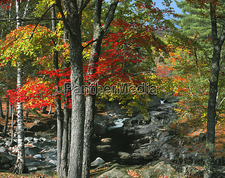 usa maine coos canyon fall colored