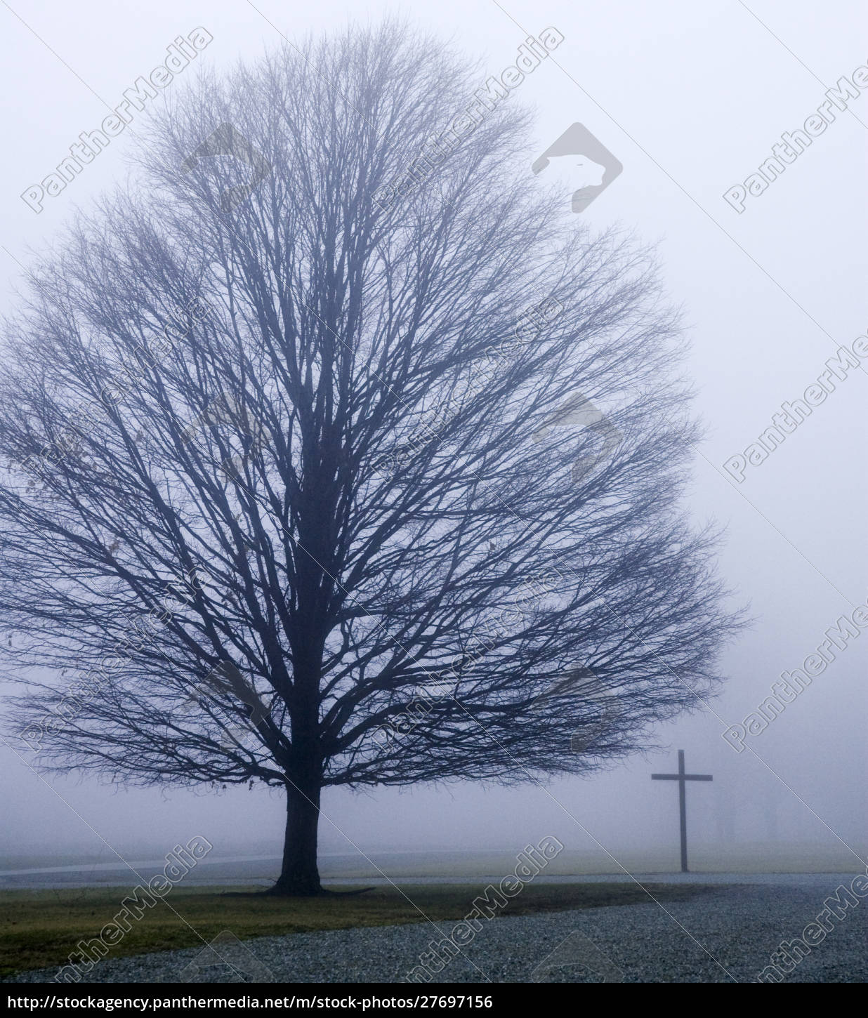 usa, , indiana, , westfield., tree, and, christian - 27697156