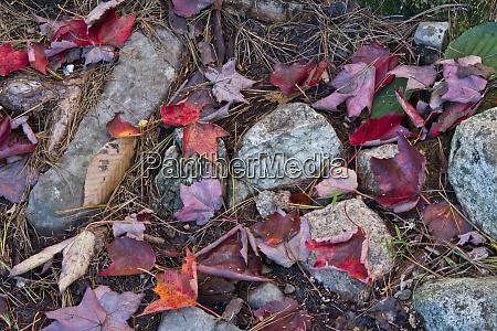 autumn leaves near bubble pond acadia