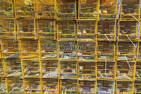 yuen po street bird garden market
