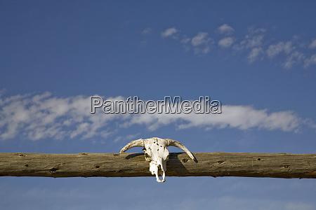 united states montana livingston skull over