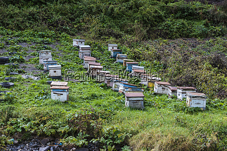 georgia mtskheta juta set of beehives