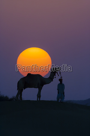 camel and person at sunset thar