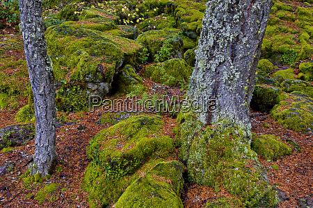usa oregon rogue river wilderness moss