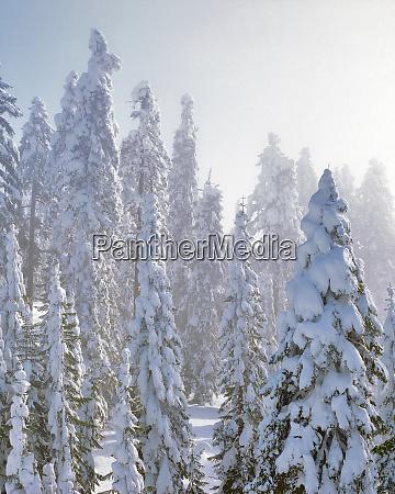 usa oregon mt ashland fresh snow