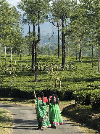 women walking on path amid tea