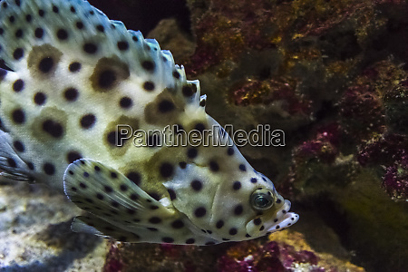 usa oregon ocean fish in oregon