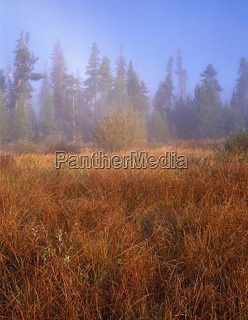 usa oregon deschutes national forest autumn