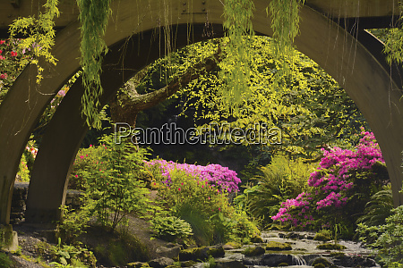 spring color of azaleas and rhododendrons