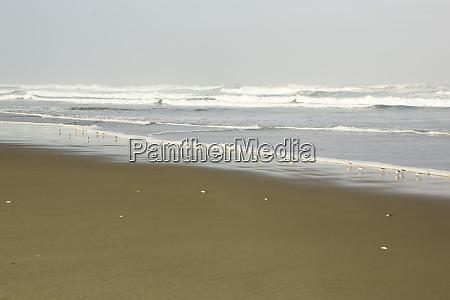 magnificent sand dunes of oregon dunes