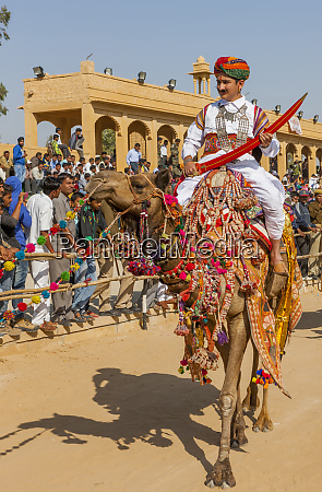 military on decorated camels festival parade