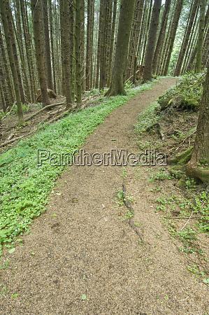 cooks ridge trail cape perpetua suislaw