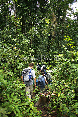 asia indonesia sulawesi trekking through verdant