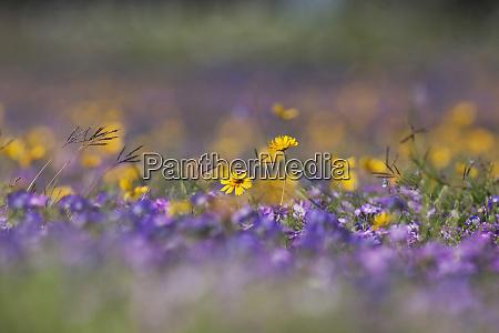 roadside wildflowers in texas spring