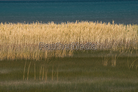 usa utah grasses blowing in the