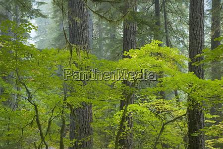 usa washington mount rainier national park