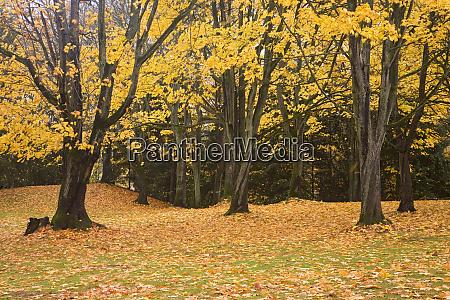 wa seattle autumn at woodland park