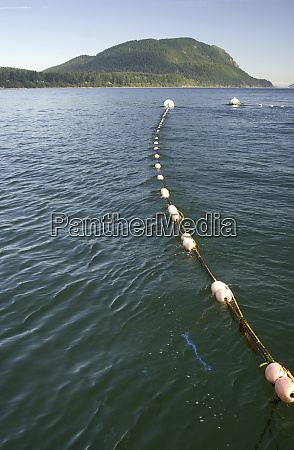 reefnet fishing on legoe bay lummi