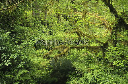 jackson creek in the hoh rainforests