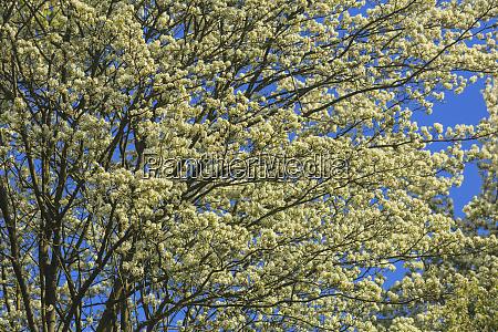 washington park arboretum spring blooms seattle