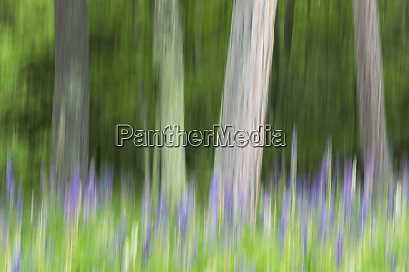 abstract artistic blur of trees and