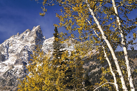 usa wyoming grand teton np autumn
