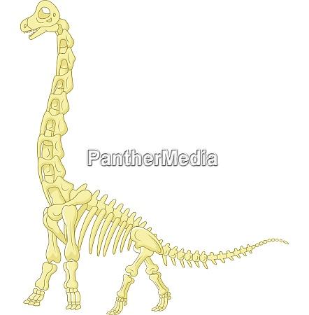 sauropod skeleton