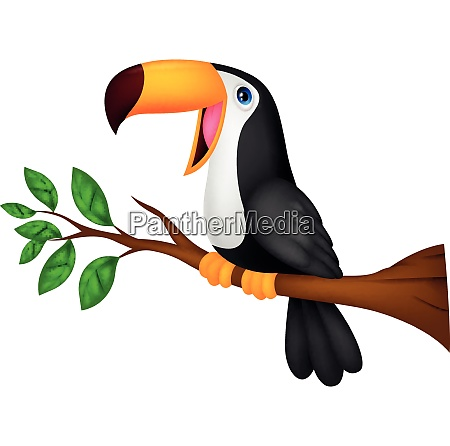 funny toucan bird cartoon
