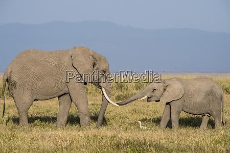 east africa kenya amboseli national park