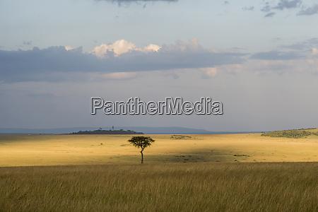 east africa kenya maasai mara national