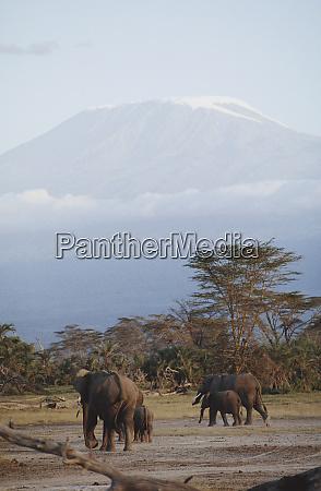 africa kenya tanzania mt kilimanjaro africas