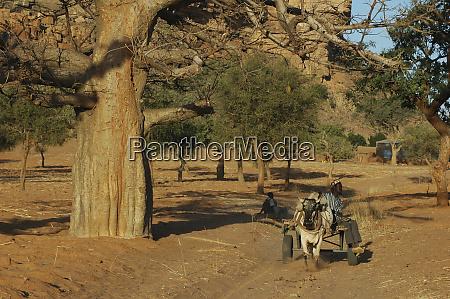 mali dogon country man traveling on