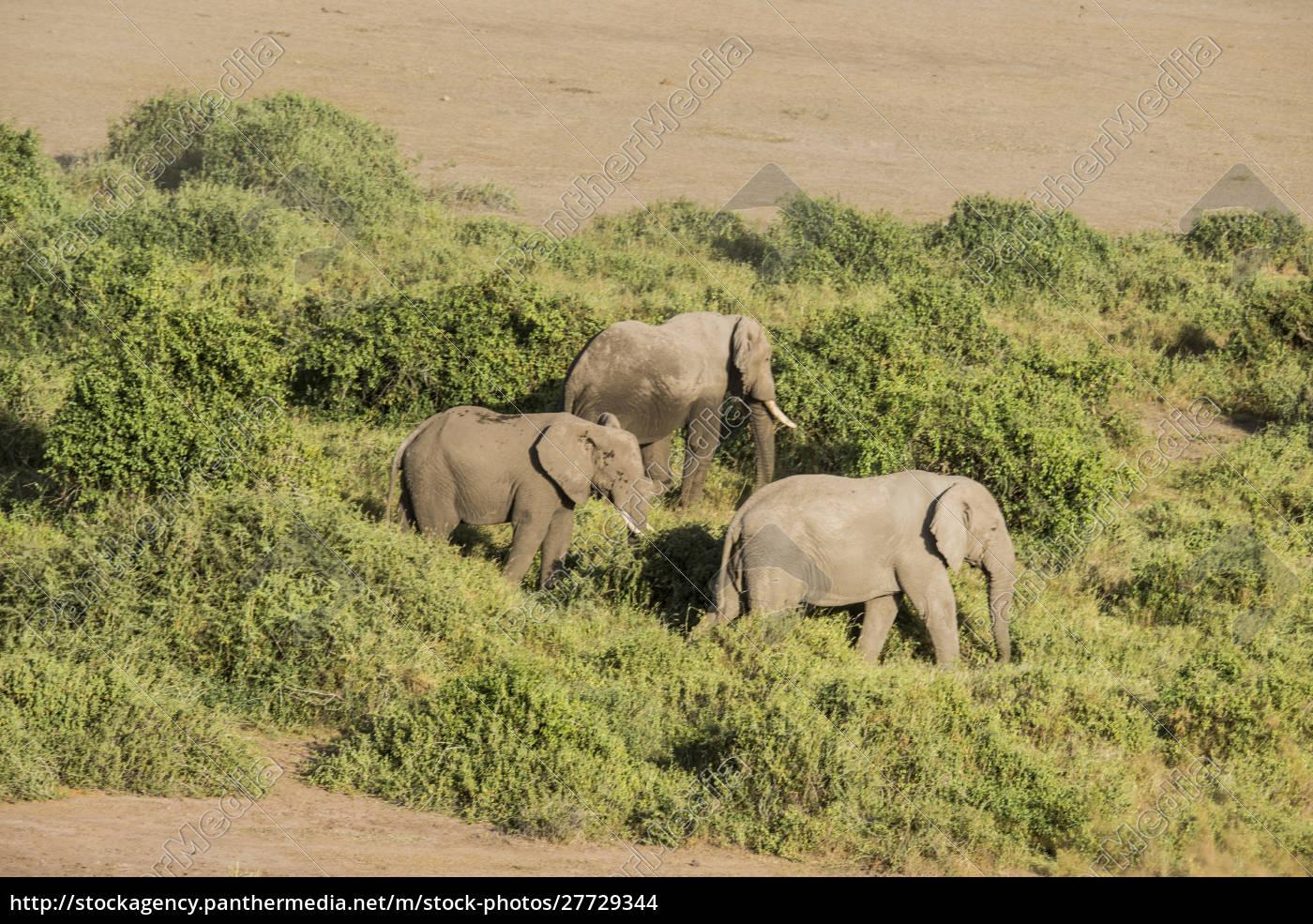 east, africa, , kenya, , amboseli, national, park, - 27729344