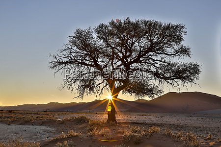 africa namibia sossusvlei dunes at sunset