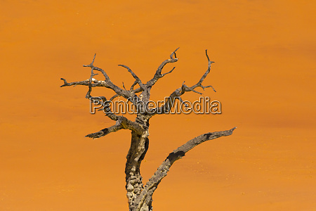dead acacia trees in deadvlei sossusvlei