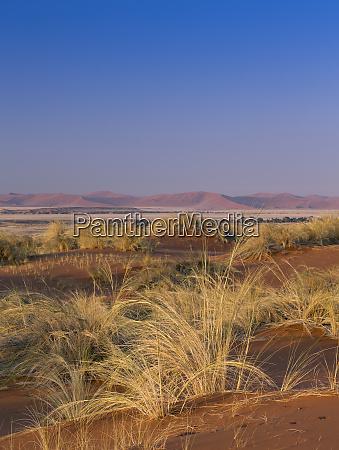 desert grasses sossuspoort lookout in the
