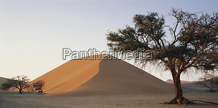 namibia namib naukluft national park acacia