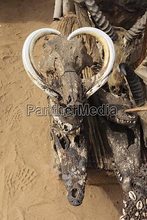 africa west africa togo lome boar