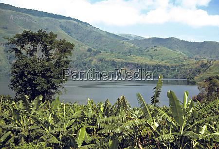 africa uganda highlands a banana plantation